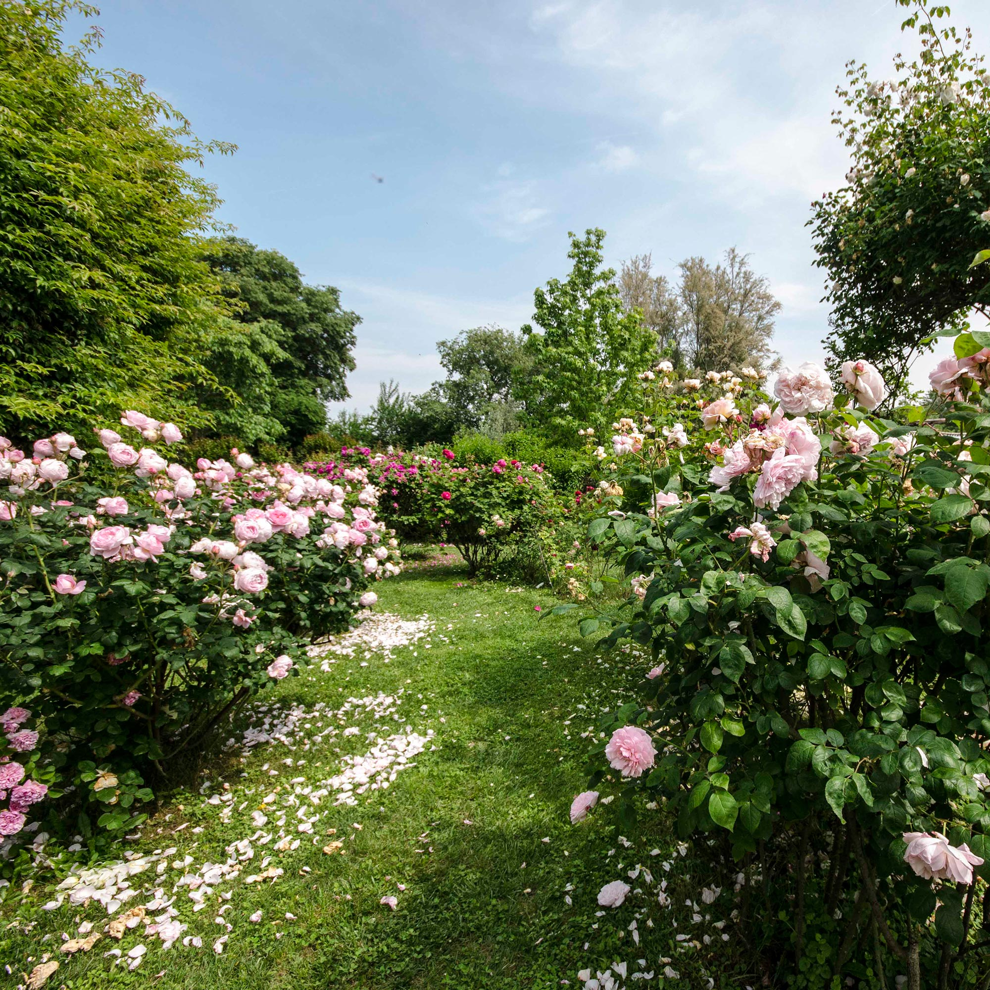 Quistini Castle | Roses labyrinth, bioenergetic and secret garden in on